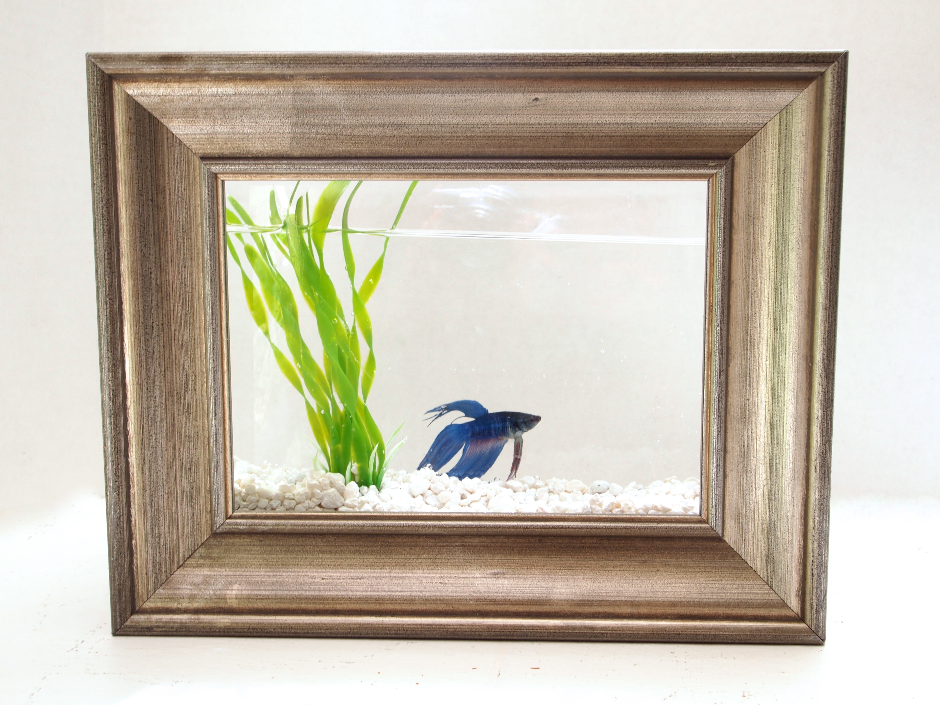 Diy framed fish tank diy framed fish tank jeuxipadfo Images