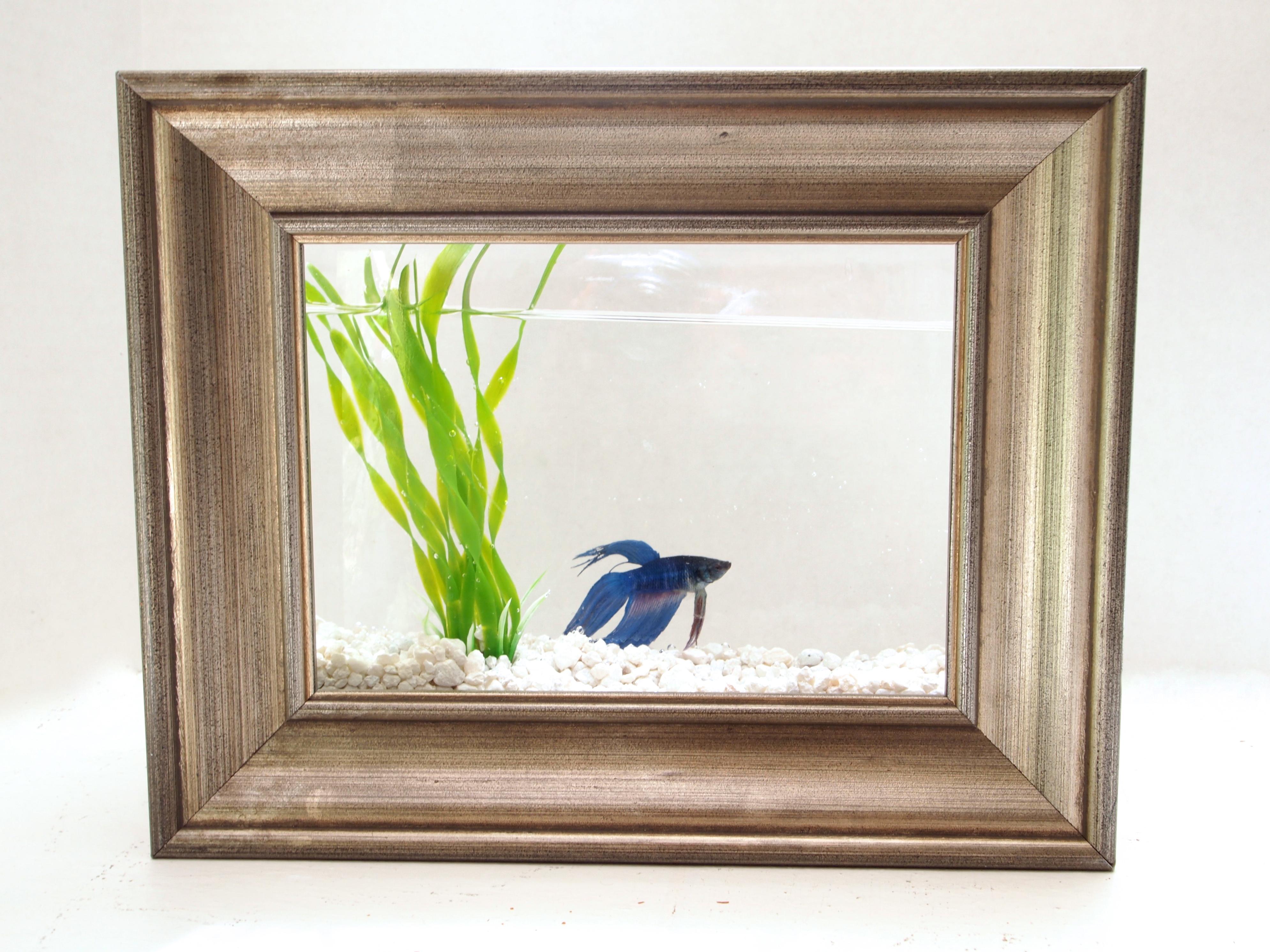 Fish aquarium for betta - Diy Framed Fish Tank